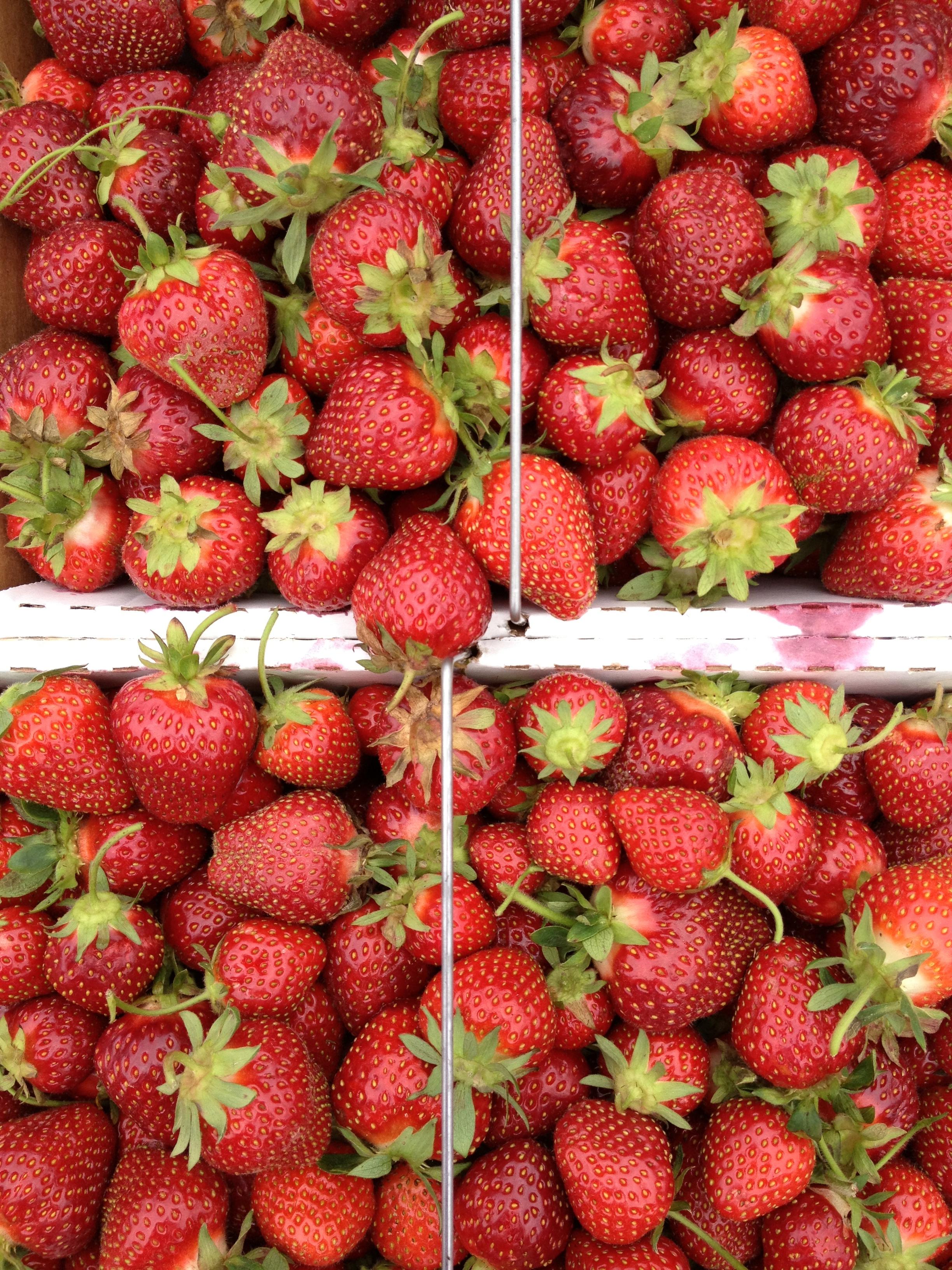 Strawberry-Vanilla Bean Jam | thebrookcook